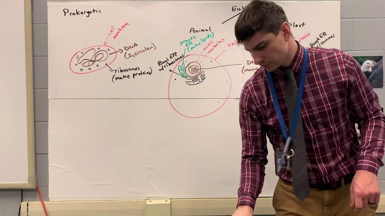 Keystone Biology Review 2 - YouTube