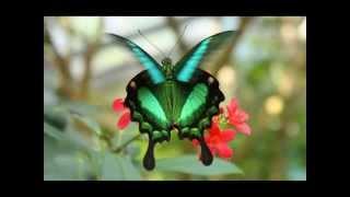 Butterflies-Dragonflies