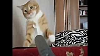 The Video Out - cool cats No. 2 / Ржачные кошки 2 2012