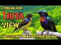 Suara Konin Gacor Suara Konin Gacor Suara Burung Kolibri Ninja Burung Konin Gacor Konin  Mp3 - Mp4 Download