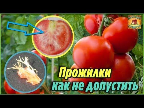 Вопрос: Почему помидоры жесткие?