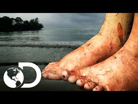Coceira mortal | Largados e pelados | Discovery Brasil