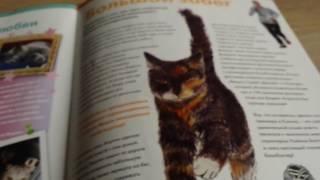The cat collection номер 45 Таксин тайский блю пойнт  (тайская голубая)