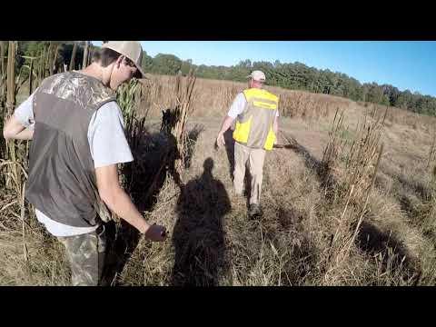 Quail Hunting In Georgia