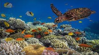Underwater Ambience, Deep Relaxing Music, Sleeping Music, Meditation Music