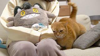 猫のぬいぐるみを可愛がったら嫉妬してくれるって聞いたんですけど…?