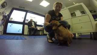 Aqua Dogs- Cardiff's Canine Hydrotherapy Centre