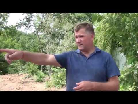 Любимый виноград 2018 года Николай Колесник
