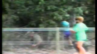 vuclip Big bird attacks person - cassowary (not a pretty sight)