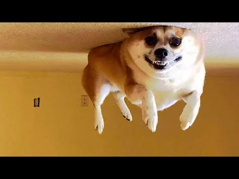 Funniest Cats and Dogs – Awesome Funny Animals (2020)