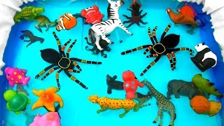 Learn Colors With Wild Animals in Pool Water Colors For Kids