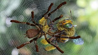 amazing big battle in tropical forest: Hornet bees vs spider _ Who will be the winner?