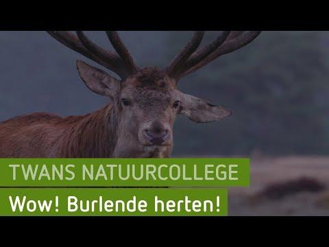 Wow! Burlende herten! | Twans natuurcollege