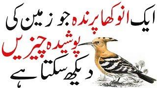 Interesting Facts About Hoopoe Bird | Bird house | Hoopoe Bird Facts | Interesting About birds
