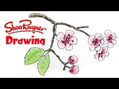 how to draw cherry blossom youtube