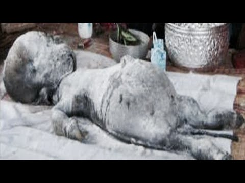 Top 15 STRANGEST Unidentified Creatures Ever Found