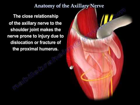 Anatomy Of The Axillary Nerve - Everything You Need To Know - Dr. Nabil Ebraheim