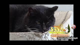 SBS TV 동물농장 엔딩 + SBS NEXT  - 집사부일체 재방송