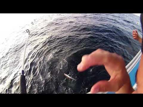 Shark Sighting While Fishing In North Rustico, PEI