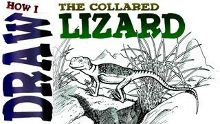 How to Draw the Collared Lizard (advanced)- Spoken Tutorial