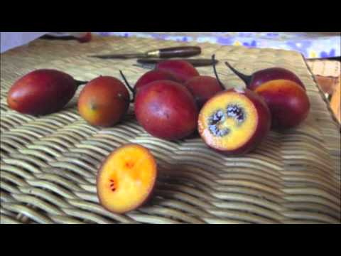 The Ten Best Fruits In The World