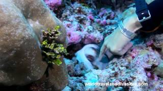 Sea creatures of the South Pacific