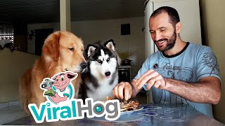 Dogs Tested with Chicken || ViralHog