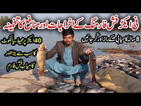 Fish Farming In Pakistan   Sialkot Biggest Fish Farm   How To Start Fish Farm   Fish Business