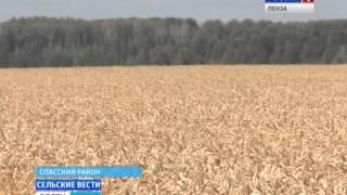 Пензенские хозяйства показывают урожайность свыше 50 центнеров с гектара(Пензенские хозяйства показывают урожайность свыше 50 центнеров с гектара http://penza.rfn.ru/region.html?rid=532., 2015-09-08T14:59:14.000Z)