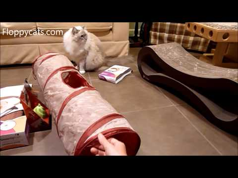 Cat Tunnel: Ragdoll Cats Receive SmartyKat...