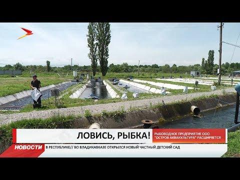 Рыбхоз из Северной Осетии планирует стать самым крупным предприятием в Европе