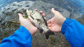 КАРАСЬ НА НАНО ДРОПШОТ МЕГА УЛОВИСТАЯ СНАСТЬ Рыбалка в Подольске