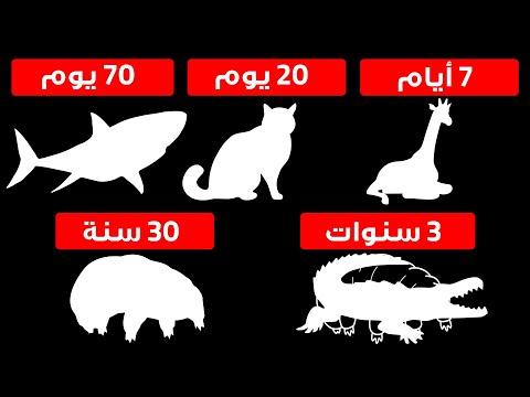 كم من الوقت يمكن للحيوانات البقاء دون طعام