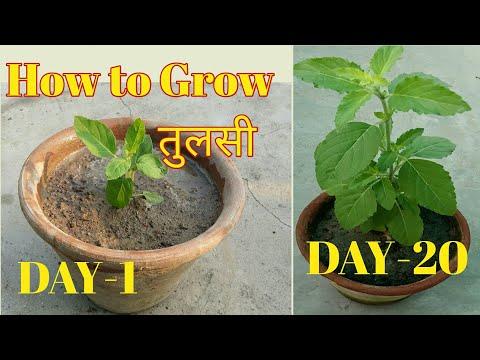 ये  5 पौधों  आपके  घर की हवा को कर देगें शुद्ध || Air Purifying Plants