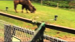 Верблюд camel