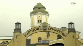 Tierquälerei im Schlachthof ORF Kärnten Heute