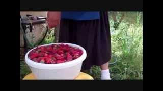 ריבת תות שדה של סבתא שושי ~ Shoshi Ozeri