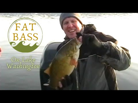 Winter Smallmouth Bass Fishing on Lake Washington