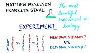 The Most Beautiful Experiment in Biology: Meselson & Stahl, The Semi-Conservative Replication of DNA