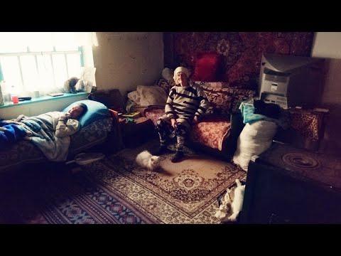 """Приют """"Кошкин дом"""" организовала женщина в своём доме в селе."""