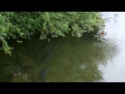 Ribolov s kamero - reka Vipava