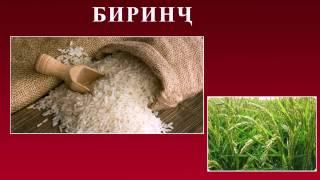 Канзи Шифо  -  Биринҷ, Бодиринг, Забонгазак