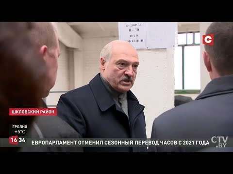 Лукашенко: Это Освенцим... Виновных в СИЗО. Президент возмущен содержанием коров в Шкловском районе