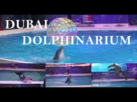 dolphin-show-||-meet-the-smartest-water-mammals-||-dubai-dolphinarium