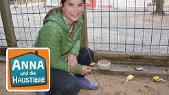 Kanarienvogel und Zebrafink | Information für Kinder| Anna und die Haustiere