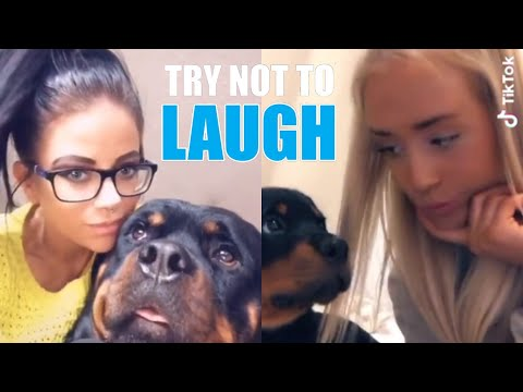 NEW Rottweiler Funny Videos (Compilation) | Featuring Cute Rottweiler Puppies