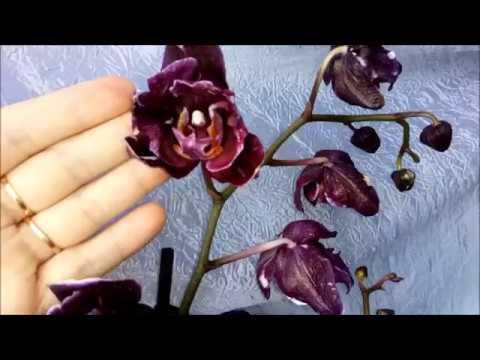 Еще одна не большая часть моих цветущих орхидей.31.07.2018