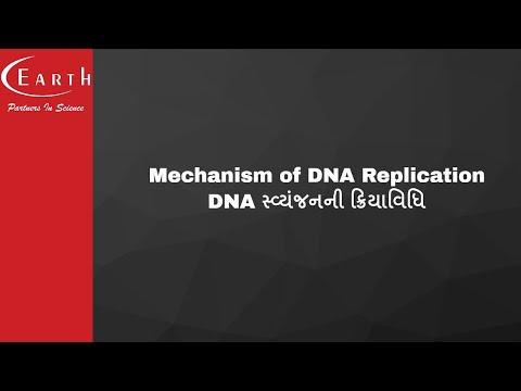 Mechanism of DNA Replication | DNA સ્વ્યંજનની ક્રિયાવિધિ | Molecular Basis of Inheritance