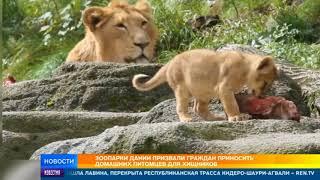 Зоопарки Дании призвали приносить домашних животных на корм хищникам