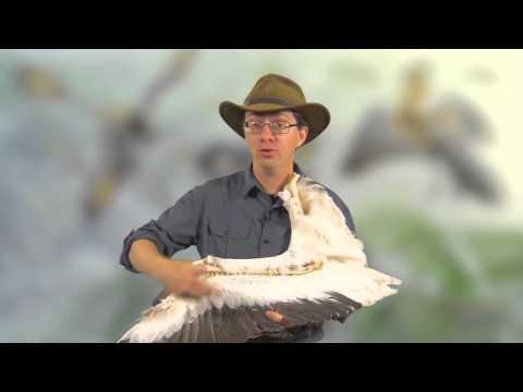 Paleo 101: Theropod Dinosaurs and the Origin of Birds